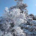 «Красавица зима» О.ЛОСКАРЕВА