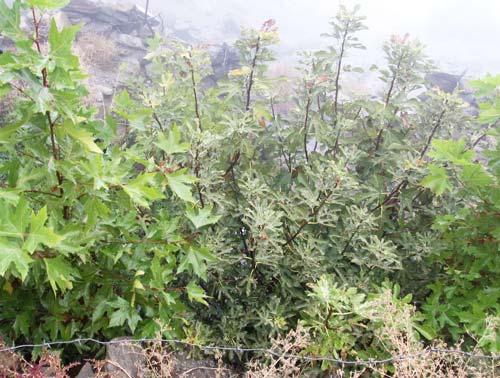 Деревья на роднике Аксув