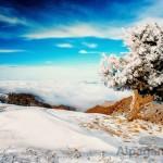 I место «Замерзшее дерево» Бекмурад БЕКМУРАДОВ