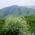 III место «Белое на зеленом» Тереза УВАРОВА