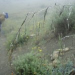 II место «Поход в тумане» Елена КУРБАНОВА