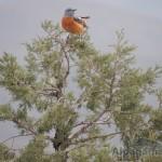 «Птичка райская, я!» Руслан БАЛТАЕВ
