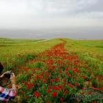 «Дорога из маков» Тереза УВАРОВА