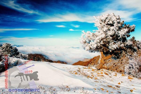 «Замерзшее дерево» Бекмурад БЕКМУРАДОВ