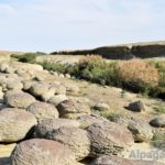 Каменные черепахи