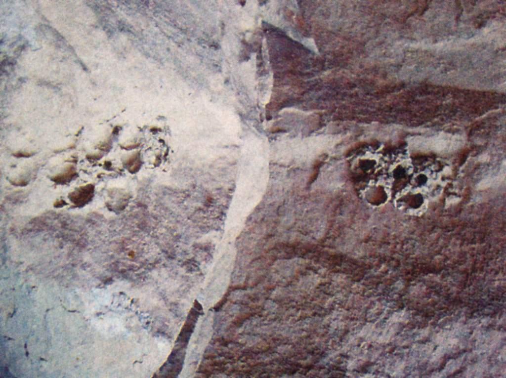 «Олимпийская эмблема страны Ос» и остатки колонии древних моллюсков. Кайлидаг
