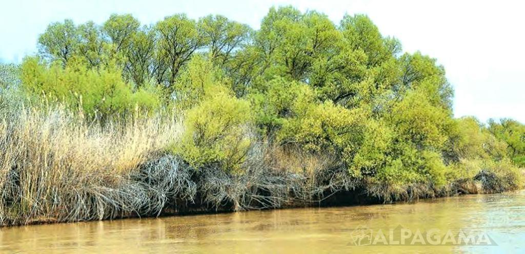 Тугаи - реликтовые леса на берегах Амударьи