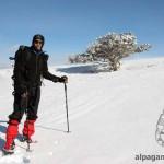 «Снег, дерево и Бегенч» О.ЛОСКАРЕВА