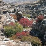 «Разноцветная осень» В.СТЕПАНОВ