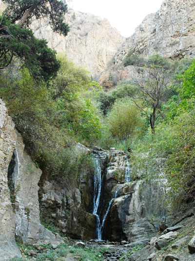 Растительный мир Копетдага