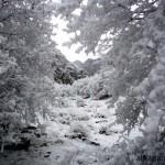 «-15 (зима 2013 год)» Тереза УВАРОВА