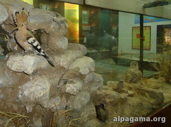 Музей природы Хазарского Государственного заповедника, г.Туркменбаши