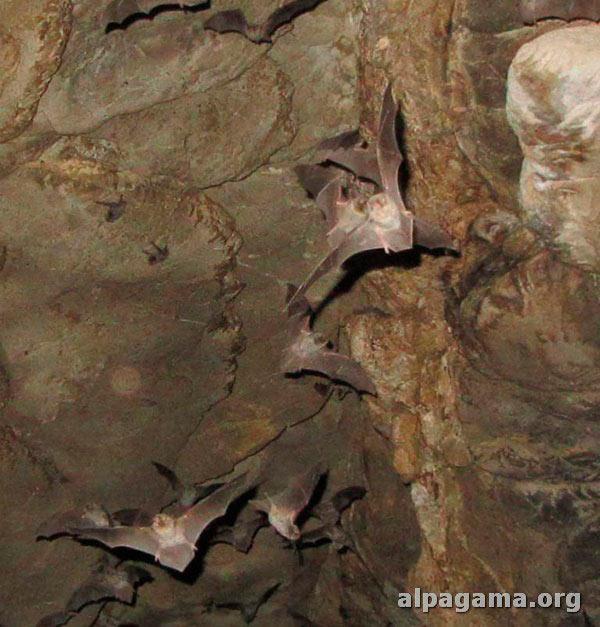 Летучие мыши – хозяева подземелья