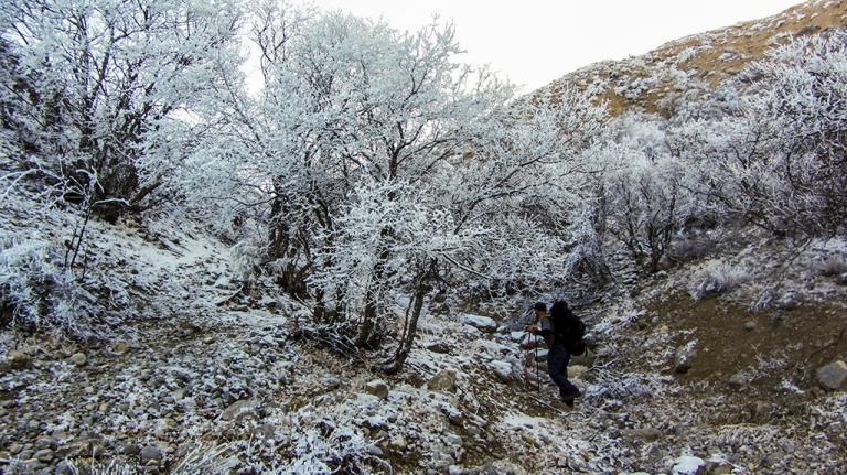 хрустальный лес на горе Душак
