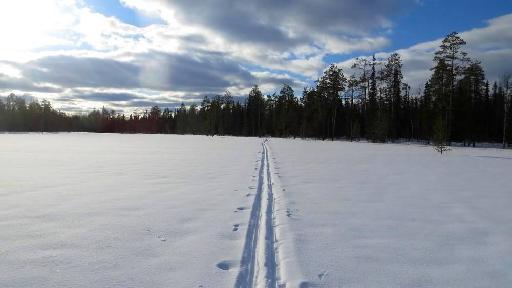 Лыжня близ деревни Аранец. Возвращение
