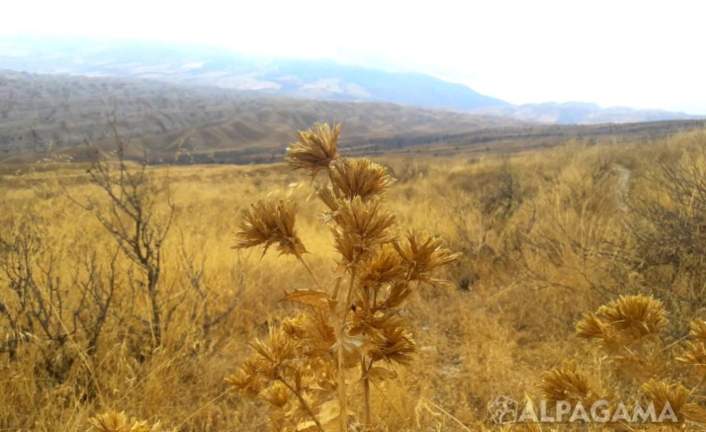 башкирское редколесье фото црушный проект просто