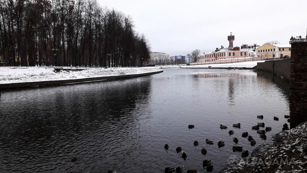 Уточки на реке Уводь в Иваново