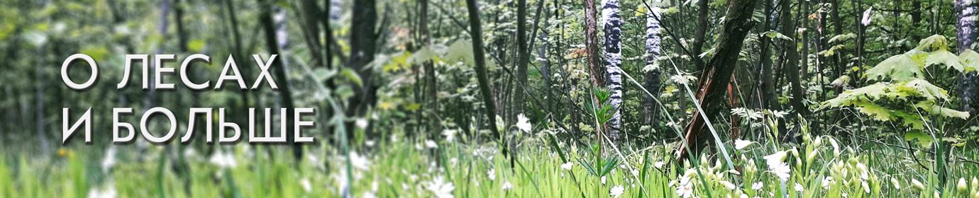 О лесах и больше