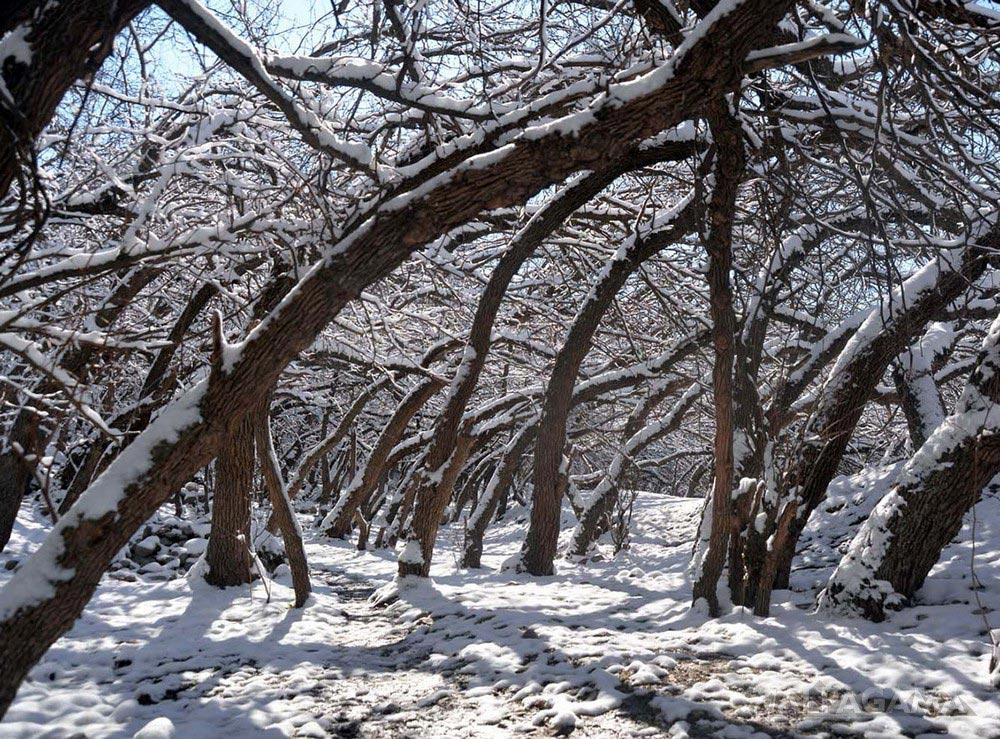 Роща Унаби зимой