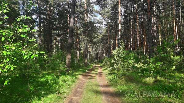 Смешанный лес к лету – все вокруг цветет и ползает