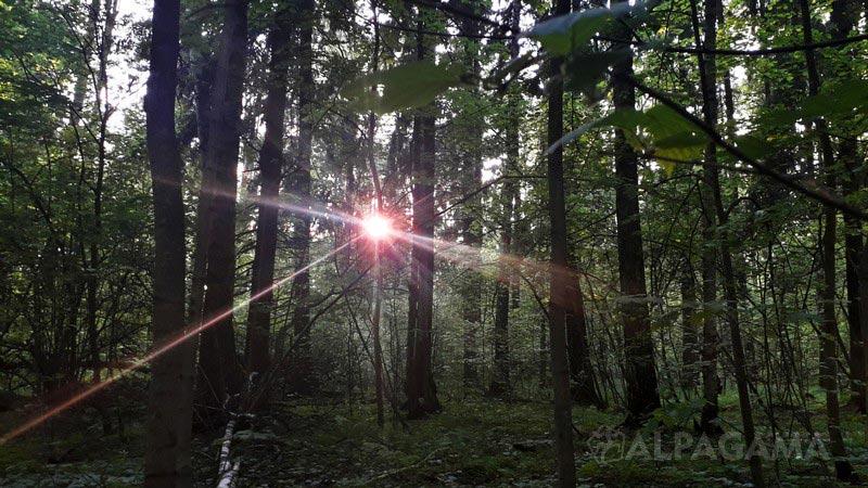 Через мокрый лес или джунгли на пять месяцев
