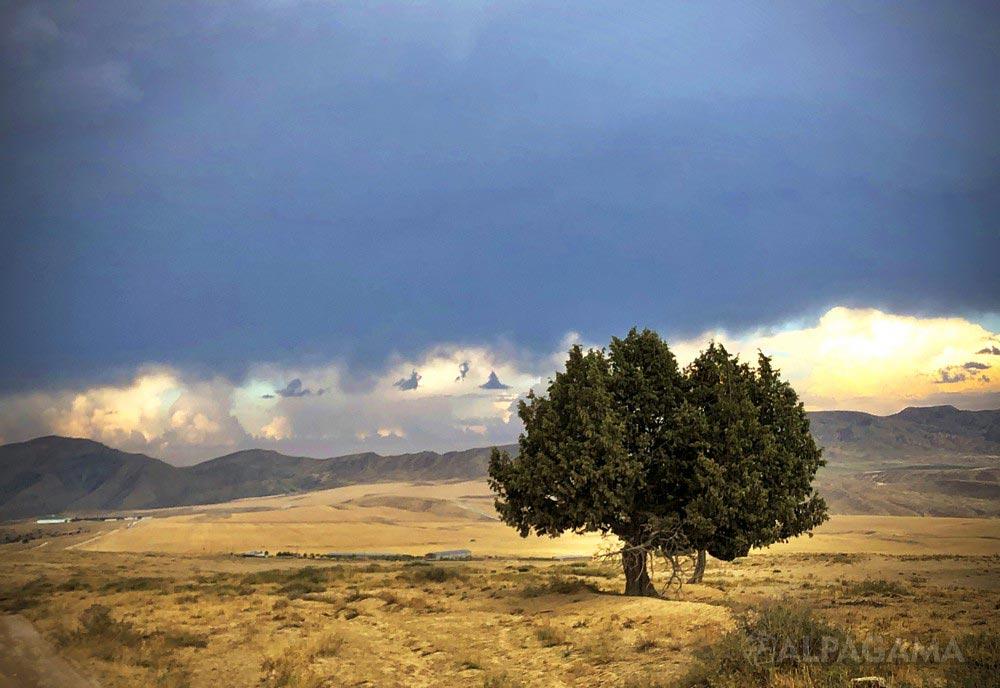 Богатырь идет на бурю (Лариса Аранбаева)